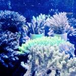 aquatics-gallery105