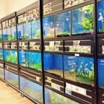 aquatics-gallery108