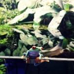 reptile-gallery100