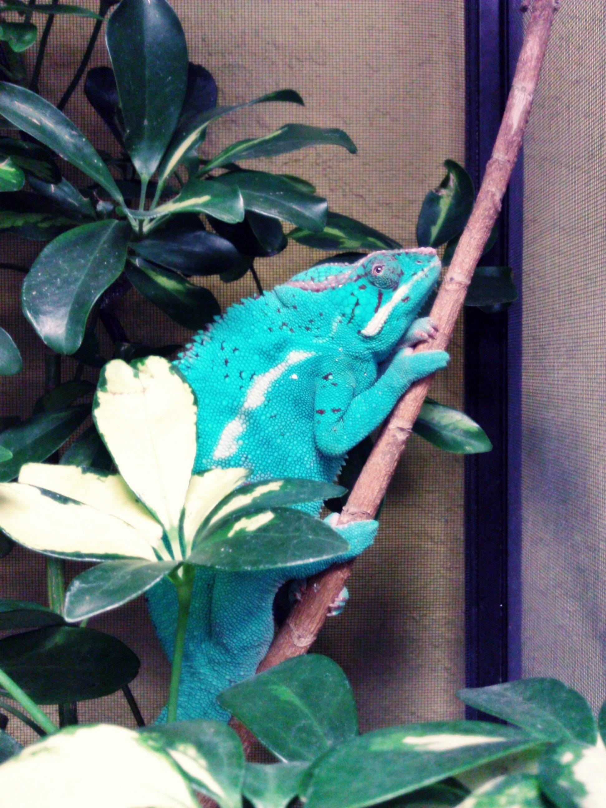 Reptiles | Critter Cabana